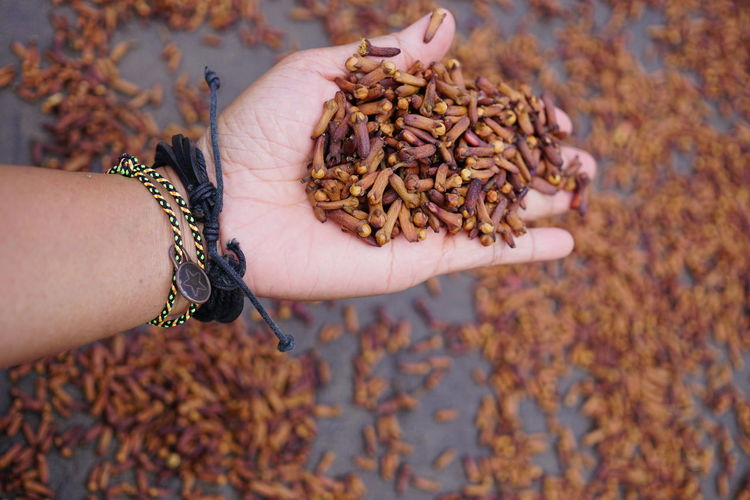 Cropped hand of woman holding cloves