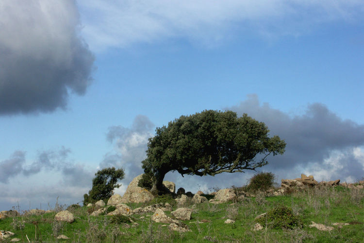 Wind forms the Trees 2 Cloud - Sky Nature No People Sardegna Sardinia Sardegna Italy  Sardinien Sky Storm Tree Treees