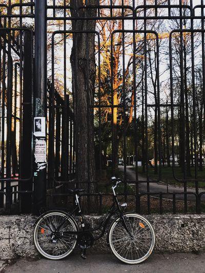 Vrum Bicycle
