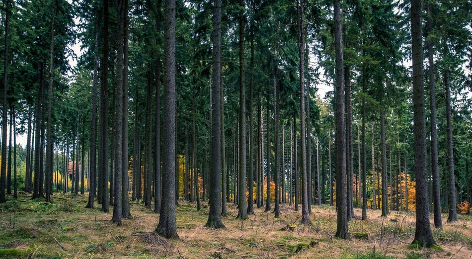 Tree Nature No People Wood Autumn