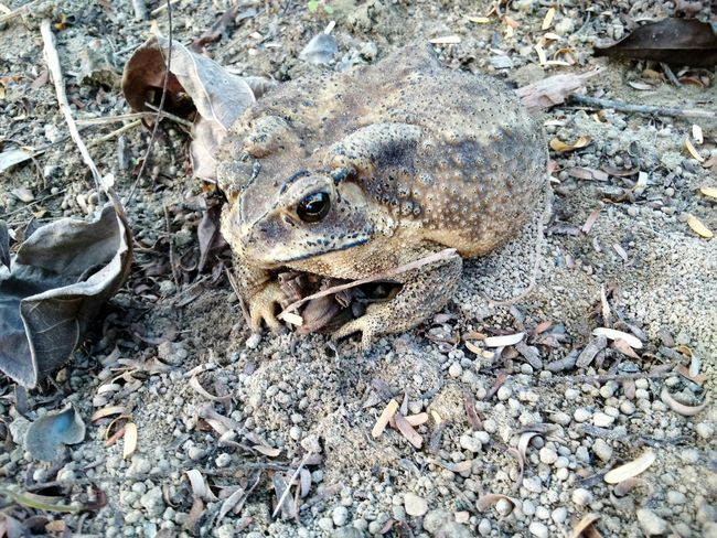 Toad Amphibian Nature Wild Life