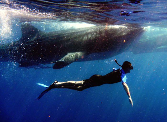 whale shark Shark Whale Whaleshark Mexico Holiday First Eyeem Photo