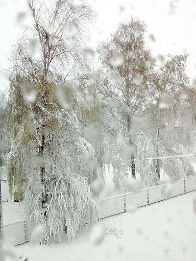 Вот такое пррисходит у нас за окном..А на дворе 19 апреля апрельскийснег Markushkinaanush нетрутинесерой капризыприроды Cold Temperature видизокна