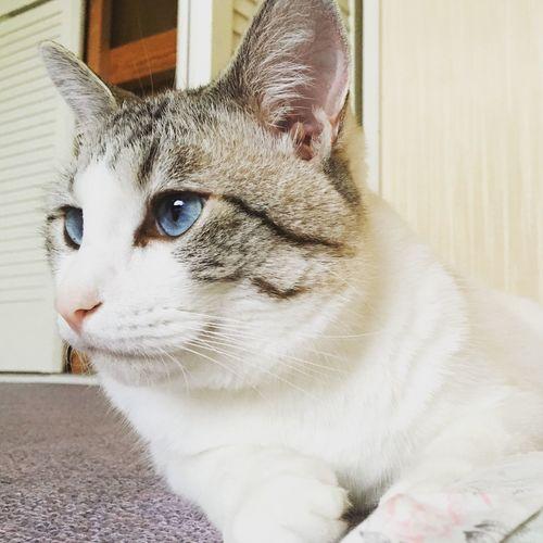 Colorful Animals Cats Manekineko Neko Cat Cat♡