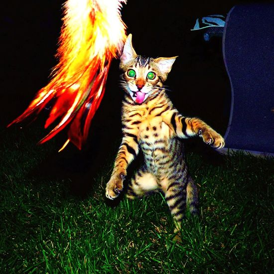 HAPPY NEW YEAR 2018✨🥂✨from ✨Crazy Funny Cats✨ channel Youtube. 🐝kind 🐝safe 🐝cool Awww Meow Happynewyear Happy 2018 Crazy Funny Cats Rogue Tabby Cat Highspeed Photography Photography Photo Rare Youtubers :D Catman! Crazycat  Crazy Moments Yeg Youtuber Kitten Sillyface Silly Animal Themes Night Mammal One Animal Feline Domestic Cat Outdoors No People Domestic Animals Pets