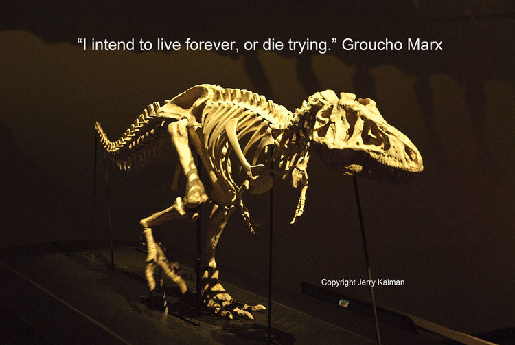 #Quotograph: #GrouchoMarx whimsical quote and a dinosaur skeleton at the #RoyalBCMuseum in #VictoriaBC Dinosaur Groucho Mar Natural History Quote Quotograph Royal BC Mus Victoria, Canada Whimsy