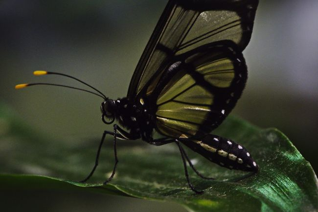 Butterfly D5500 Insect Animal Themes One Animal Animals In The Wild Close-up