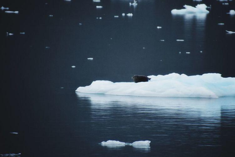 Sea Lion Sea
