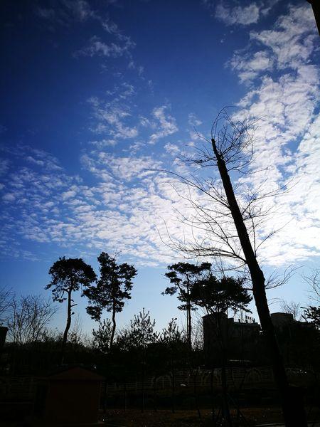 하늘사진 Sky Silhouette Nature Sunset Tree No People Beauty In Nature Low Angle View Outdoors Day