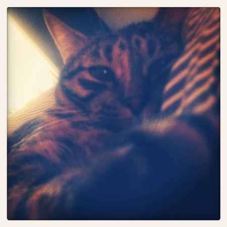 ???? Cat♡ My Beautiful Cat! Cute♡
