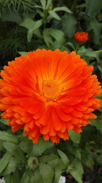 Orange Flower Flower Beauty In Nature Vibrant Colour Orange Close Up Flowers,Plants & Garden Flower Collection Colour Of Life Color Palette