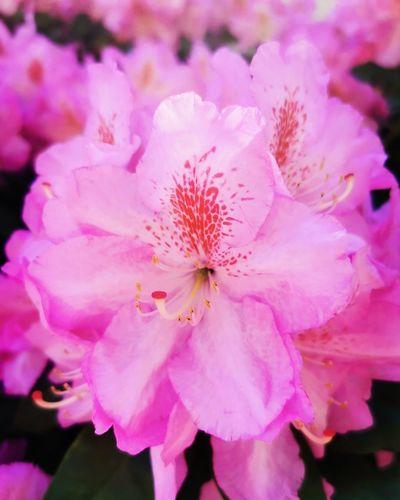 Blüte Flower