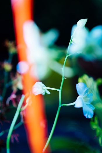 Plant Flowering Plant Flower Close-up Growth Freshness Focus On Foreground Beauty In Nature Petal Selective Focus Plant Stem Nature Vulnerability  No People Fragility