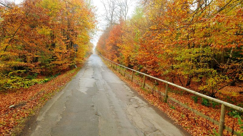 Autumn Outdoors Tree Nature No People Day Beauty In Nature Leaf The Way Forward Scenics Sky Road Forest . Forest Photography Indiansummer Roadsidephotography Roadtrip