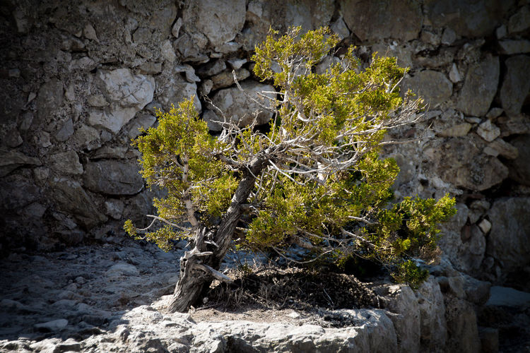 Tree Green Nature Backgrounds Beatuy Beauty In Nature Branch Close-up Day Growth Nature No People Outdoors Portrait Rock - Object Solo Textured  Tranquility Tree Tree Trunk Water