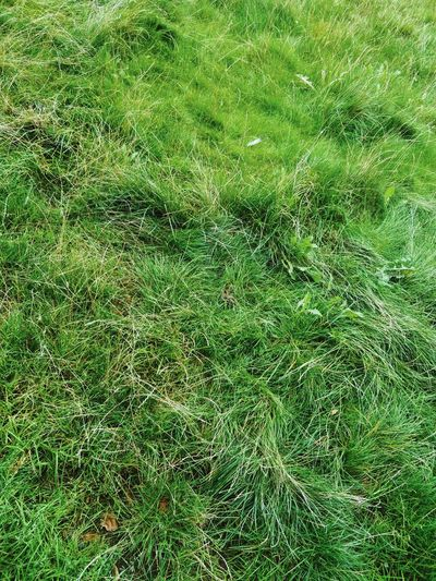 Grass Nature Outdoors No People Full Frame Green Color Copy Space Backgrounds Green Color