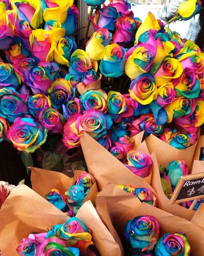 EyeEm Selects Multi Colored Roses Rainbow Rainbow Roses Flowers, Nature And Beauty Pretty Beautiful Nature Colour Of Life Bright Bright Colors
