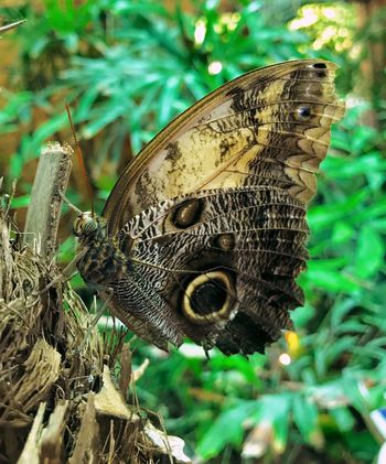 Butterfly Animal Animal Themes Close-up Animals In The Wild Animal Wildlife One Animal Plant Animal Wing Beauty In Nature Butterfly - Insect