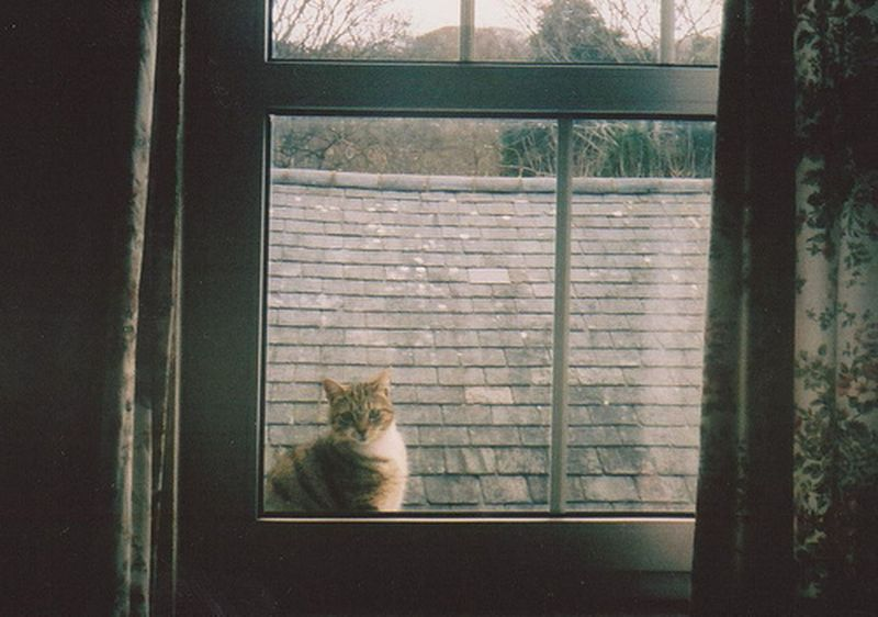 Morning Window Goldenroom Cat Vintage