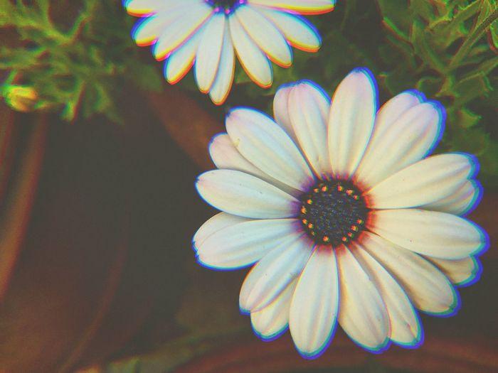 Trying something new. Flower Close-up Filter Nature Orlando Orlando Florida