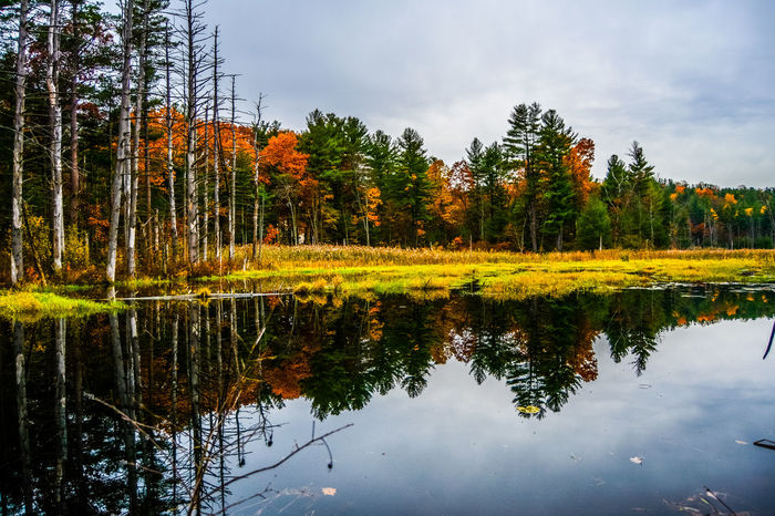 Vibrant colored swamp area viewed from waters edge Beauty In Nature Change Color Countryside Fall Forest Green Green Color Growth Horizontal Symmetry Lake Lakeshore Landscape Lush Foliage Majestic Nature Outdoors Relaxing Moments Scenics Symmetry Tranquil Scene Tranquility Tree Vibrance Vibrant