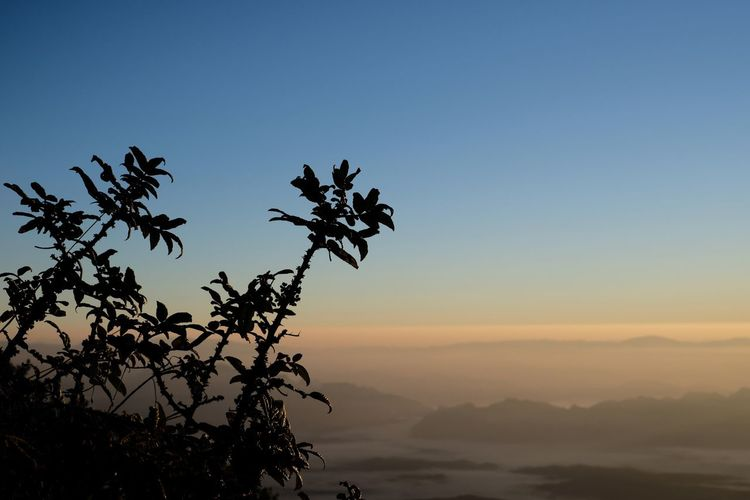 Sky Plant Beauty In Nature Scenics - Nature Tranquility Tree Tranquil Scene Sunset Growth Nature Mountain Mountain Range