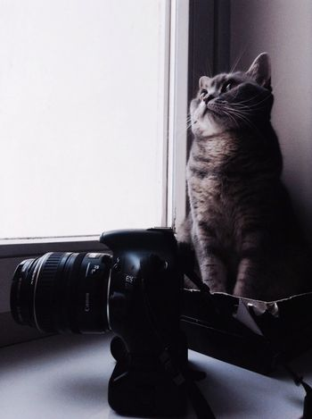 My furry assistant?? Wip Photographer Cat Assistant Camera Canon Love Nice, Awesome Vintage