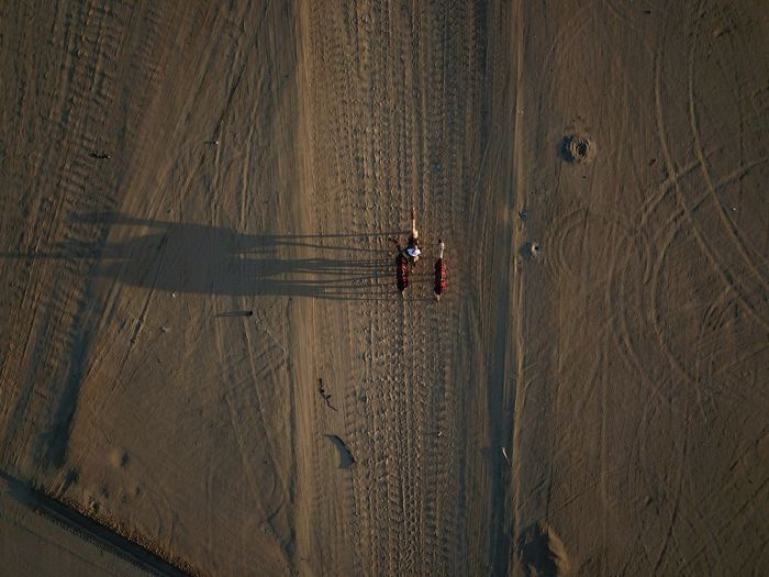 Directly above shot of camels on sand