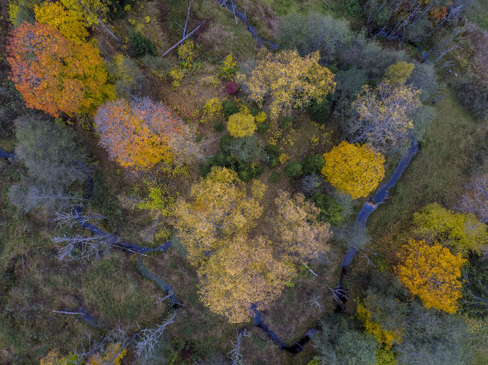Aerial Shot Autumn Autumn Colors Autumn Leaves Drone  Sweden Aerial View Animal Themes Autumn Autumn Colours Backgrounds Beauty In Nature Close-up Day Dronephotography Droneshot Full Frame Growth Lichen Multi Colored Nature No People Outdoors Sea Life UnderSea