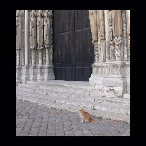 Chat pelé du chapelain de Cha...rtres devant la porte ouest de la cathédrale. Chartres Cathedral Cat Chat Gothique