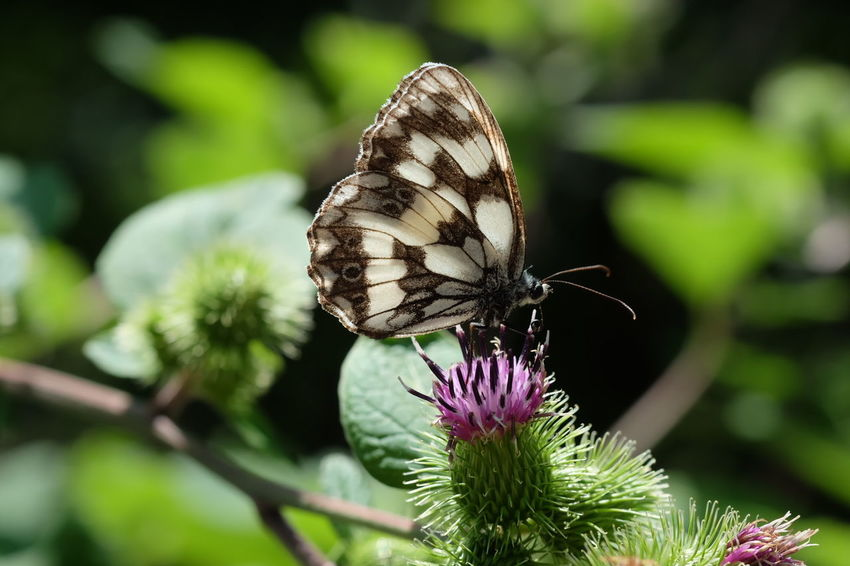 Perching Flower Full Length Butterfly - Insect Spread Wings Insect Close-up Animal Themes Plant