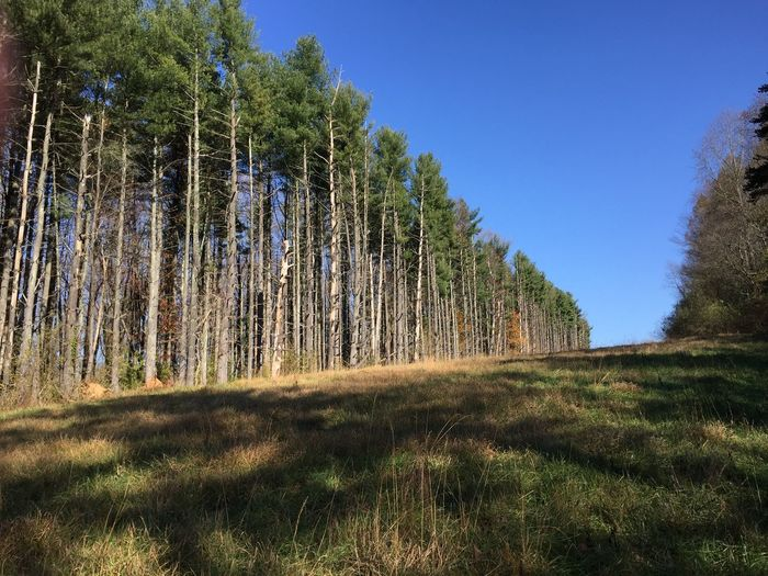 Low Angle View Of Trees In Forest Against Clear Sky