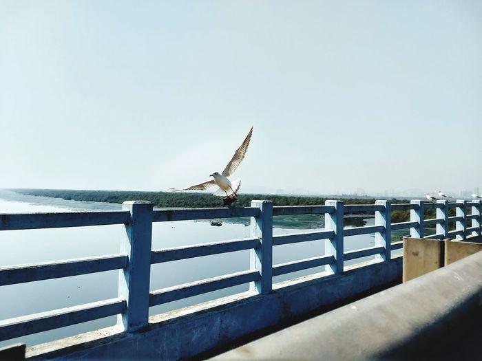 free like a bird Sea Day Water Outdoors Beach No People Sky