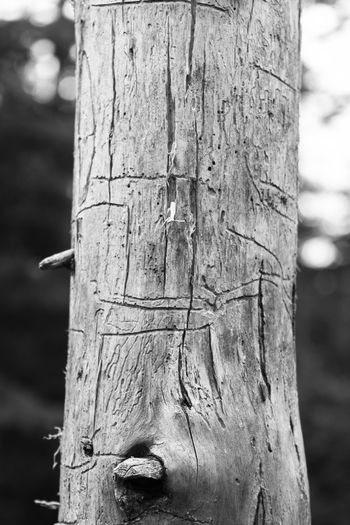 Close-up of wooden post on tree trunk