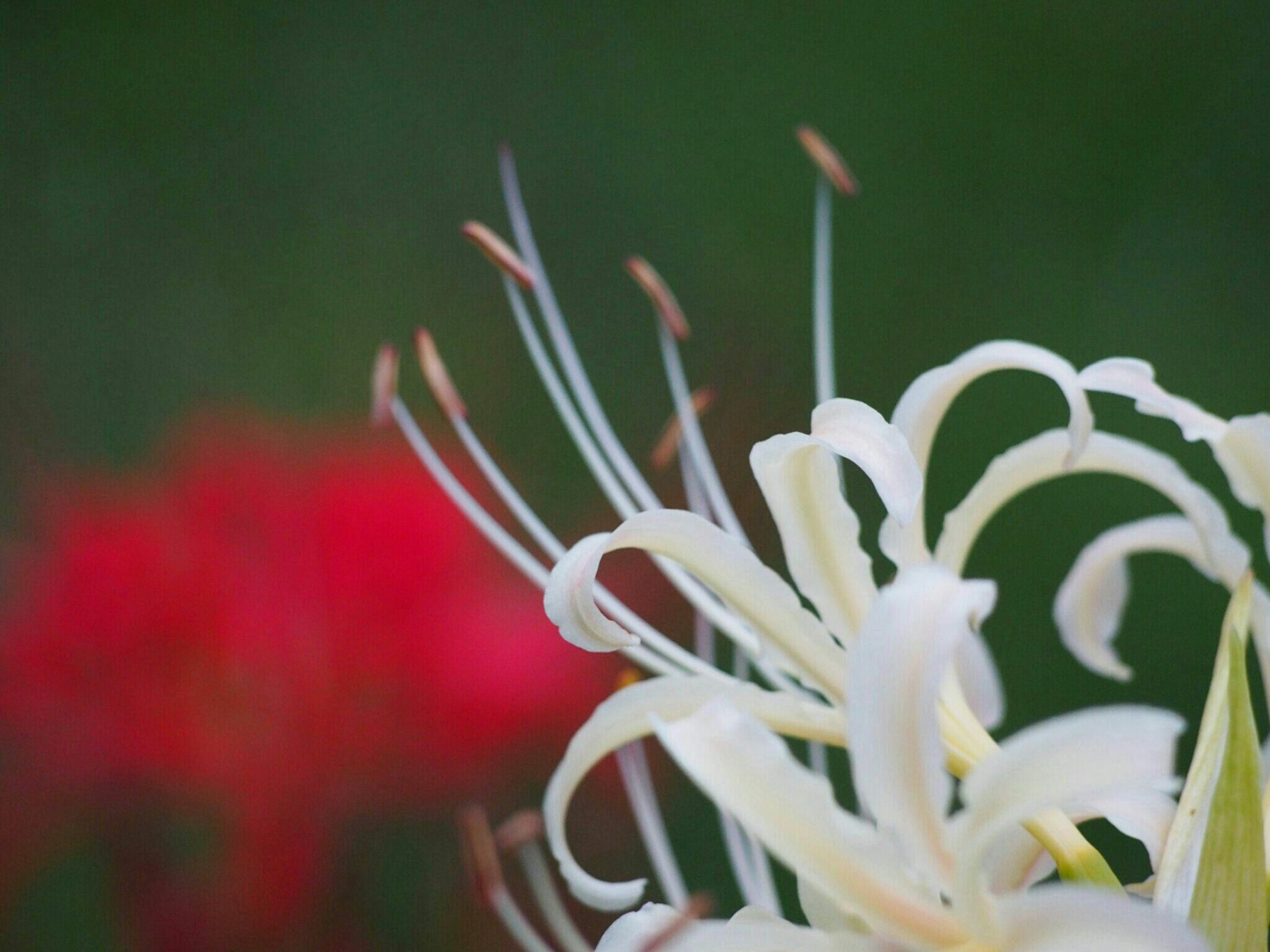 flower, growth, fragility, petal, freshness, close-up, plant, flower head, focus on foreground, beauty in nature, nature, stem, selective focus, bud, blooming, in bloom, botany, new life, no people, leaf