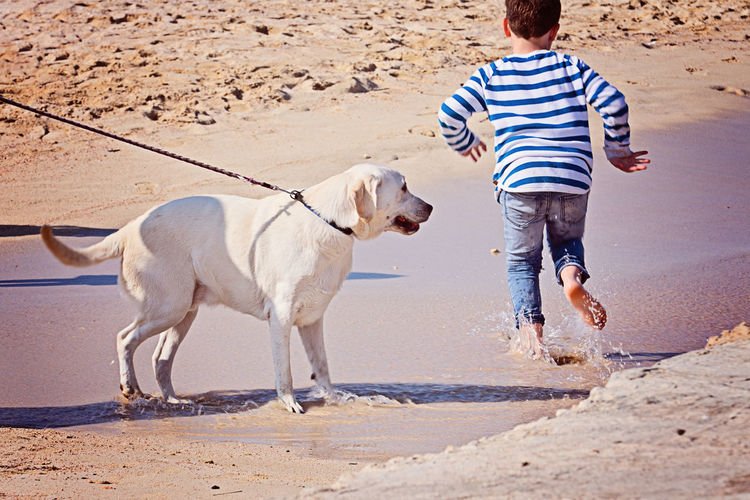 Dog Canine Pets One Animal Beach Domestic Mammal Domestic Animals Land Sand Animal Themes Animal Real People Full Length One Person Casual Clothing Childhood Nature Child Day Outdoors Pet Owner Summer Golden Retriever