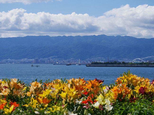 この日は神戸や明石大橋も見渡せるほど、空気も澄んでいました☆ 大阪舞洲ゆり園 Enjoying The Sun Flowers Japan HolidayNature Relaxing Blue Sky Traveling