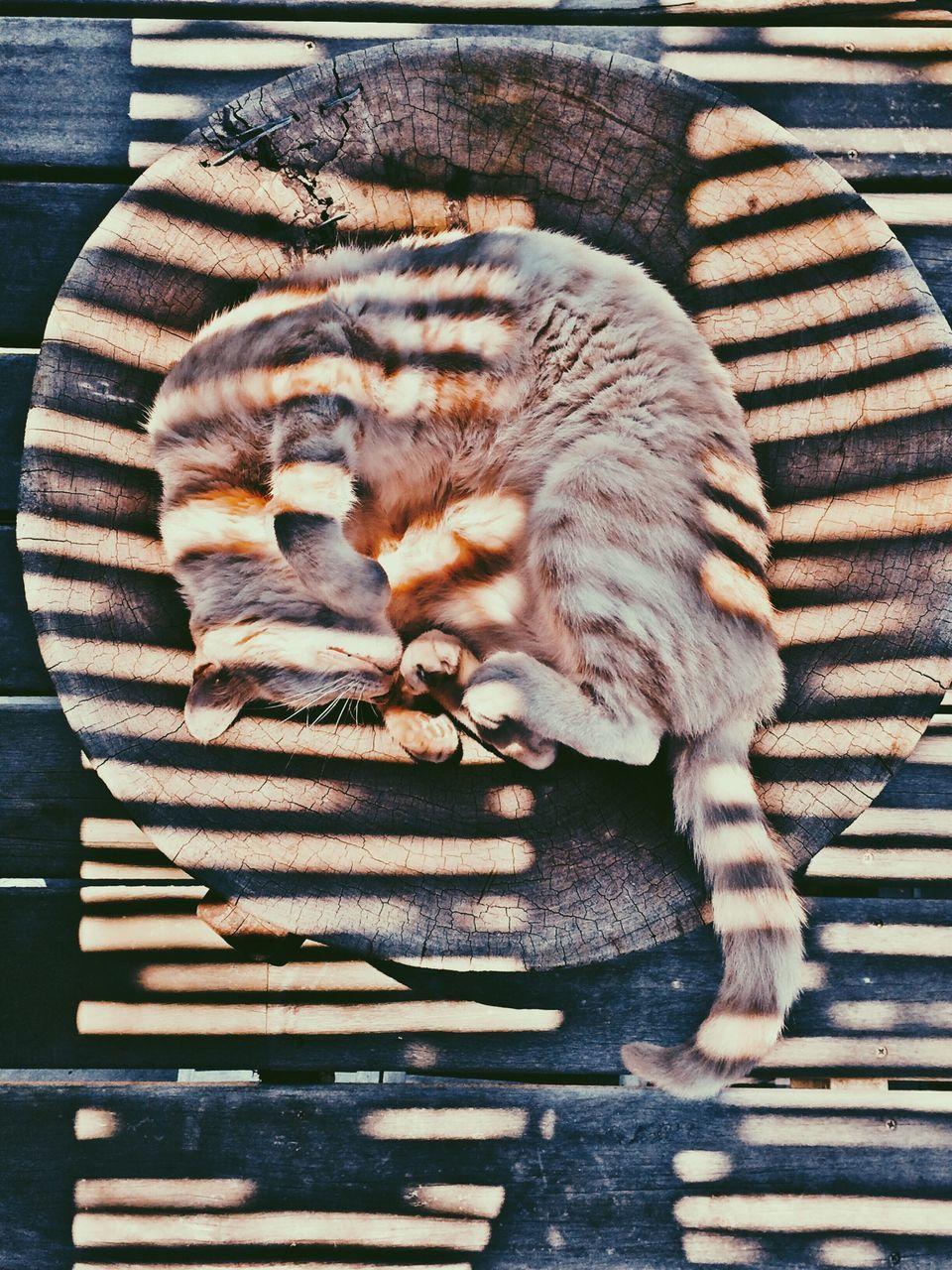 Close-up high angle view of cat sleeping on tree stump