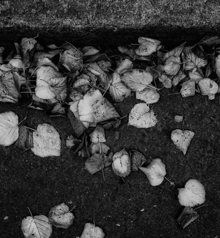 Close-up Nature Leaf Lonely Leaves Autumn Leaves🌿 Beauty In Nature Nature Fall Beauty BW_photography Bw_collection