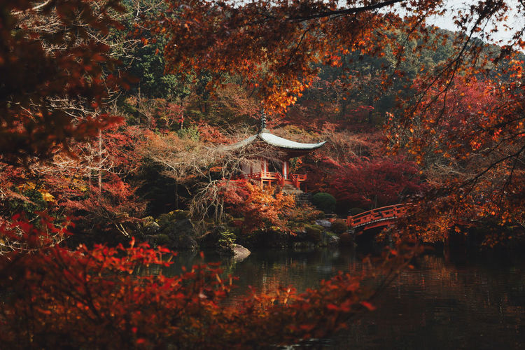 Gorgeous hues of crimson paint the perfect picture of Autumn in Kyoto, Japan. Daigoji Peace Tranquil Scene Travel Travel Destinations Japan Fall Beauty In Nature Beautiful Temple Spirituality Red Orange Tree Autumn Leaf Red Maple Leaf Maple Tree Leaves Change Dry Season  Autumn Collection The Great Outdoors - 2018 EyeEm Awards