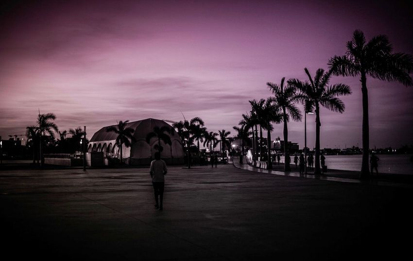 #seaside #jogging #Purple #angola Palm Tree Tree Horse Sunset Travel Destinations Silhouette Sky Beauty In Nature Outdoors Vacations Nature EyeEmNewHere