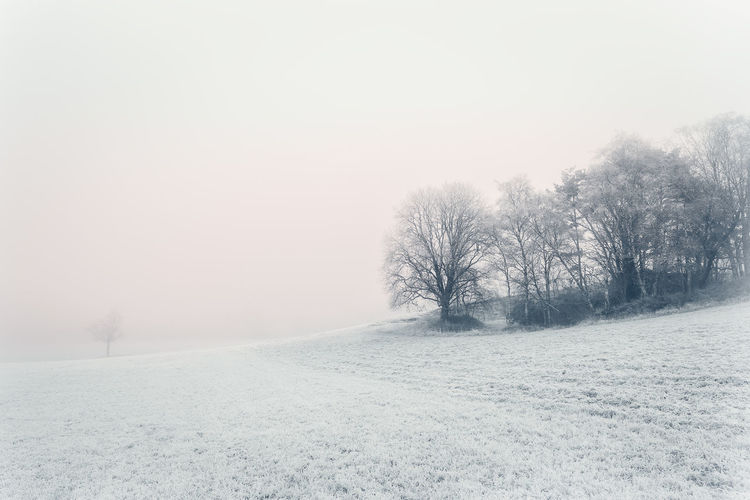 Winter landscape Beauty In Nature Beauty In Nature Cold Days Field Fine Art Photography Fog Frost Landscape Landscape Photography Nature Rime Snow Sweden Tree Winter