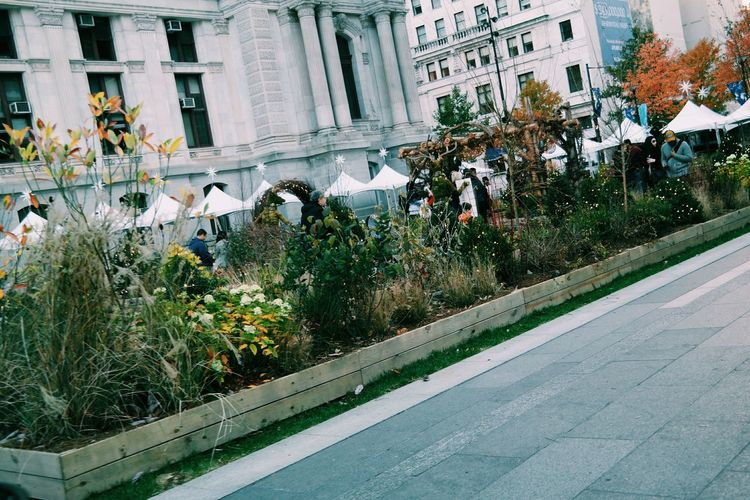 Fall beauty in Dilworth Park, Philadelphia Architecture Building Exterior Built Structure Christmas Christmas Decorations Christmas Lights City Day Fall Beauty Fall Days Fall Decorations Growth Nature No People Outdoors Plant Tree Real People Flower