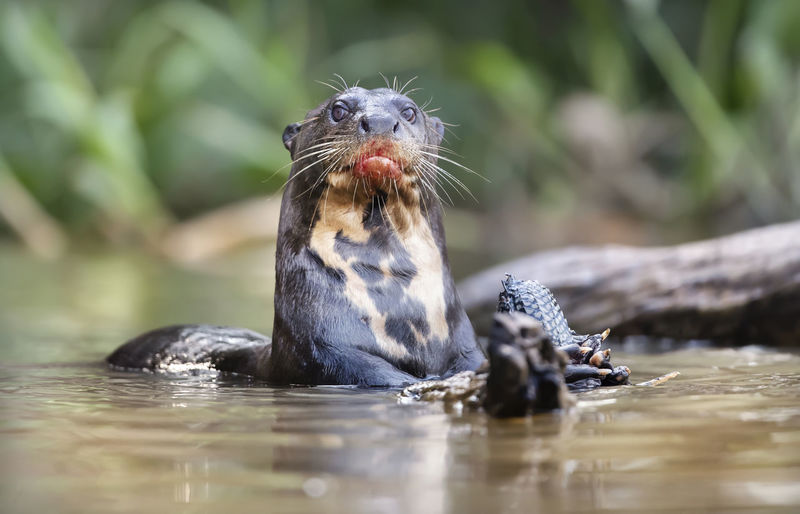 Portrait of turtle eating