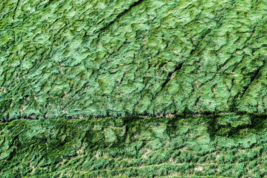 Abstract Backgrounds Close-up Day Full Frame Green Color Moss Nature No People Outdoors Pattern Salzwiese Textured  Weltnaturerbe Wattenmeer World Heritage Site By UNESCO Grass Meadow