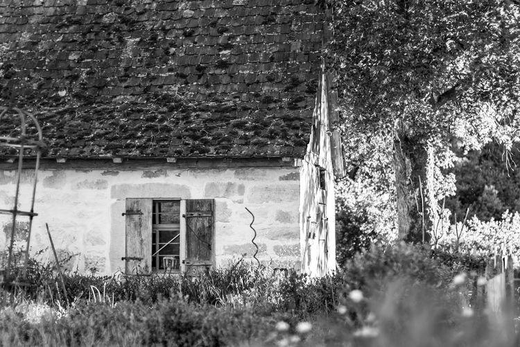 """été à la campagne -- dans les villages de la souabe, on trouve souvent des petites """"maisons"""" qui abritent le four à boulanger. Autrefois, tout le village s'assemblait ici pour faire le pain une fois par semaine. Not Selected - The Best Pics Discarded By The EyeEm Algorythm Countryside Country Life Country House Grytecture EyeEm Nature Lover Blackandwhite Monochrome Beauty In Nature Poetic Afternoon Summer Summertime Summer Afternoon Afternoon Light Bakery Tree Architecture Building Exterior Built Structure Ivy Creeper Growing Country House Countryside Lush Calm"""