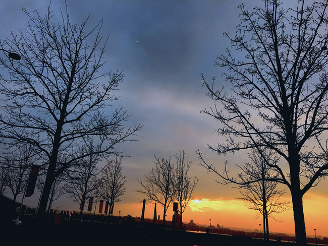 Bare Tree Beauty In Nature Branch City Cloud - Sky Day Growth Low Angle View Nature No People Outdoors Scenics Silhouette Sky Sunset Tranquil Scene Tranquility Tree Tree Trunk