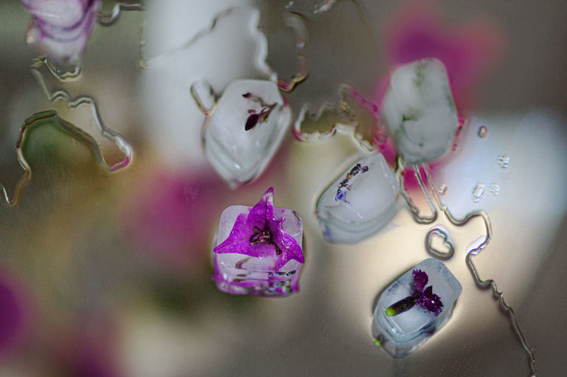High angle view of pink flowers on glass wall