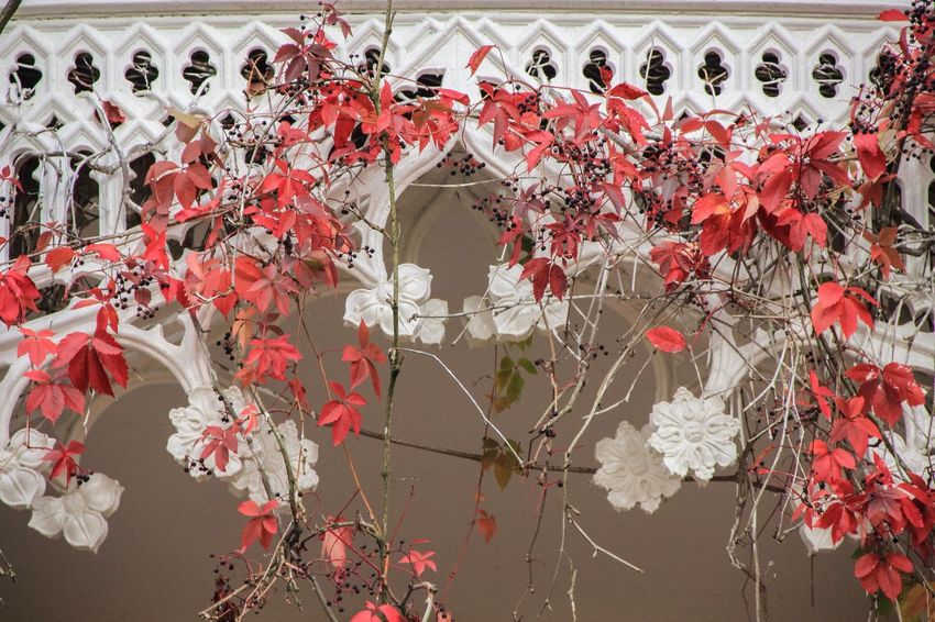 Flower Red Hanging Freshness Branch Growth Fragility Beauty In Nature Day Decoration Blossom Repetition Full Frame Outdoors Nature In Bloom Petal Park Alexandria Saint-Petersburg