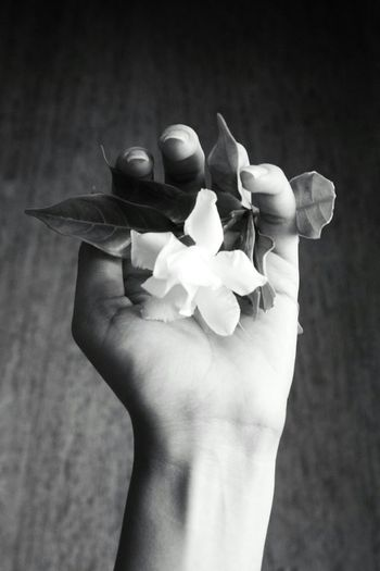 Showcase: November Black And White Black And White Photography Artsy Black And White Collection  Bnw B/w Monochrome Hand My Hand  Flower White Flower My Best Photo 2015 White White Album Telling Stories Differently The Portraitist - 2016 EyeEm Awards Nature's Diversities Found On The Roll Girl Power Fine Art Photography Monochrome Photography